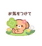 ぽかぽかトイプードル(春~初夏)(個別スタンプ:05)