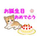 ちび猫 おめでとうスタンプ(個別スタンプ:25)