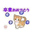ちび猫 おめでとうスタンプ(個別スタンプ:30)