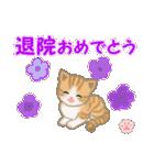 ちび猫 おめでとうスタンプ(個別スタンプ:36)