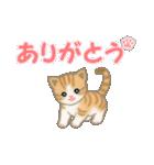 ちび猫 ありがとうスタンプ(個別スタンプ:1)