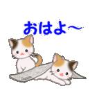 三毛猫ツインズ ひょっこり(個別スタンプ:1)