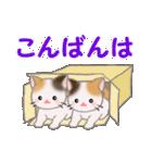 三毛猫ツインズ ひょっこり(個別スタンプ:3)