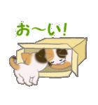 三毛猫ツインズ ひょっこり(個別スタンプ:5)