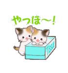三毛猫ツインズ ひょっこり(個別スタンプ:6)