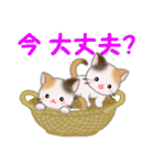 三毛猫ツインズ ひょっこり(個別スタンプ:7)