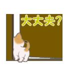 三毛猫ツインズ ひょっこり(個別スタンプ:17)