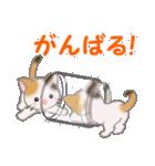 三毛猫ツインズ ひょっこり(個別スタンプ:19)