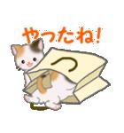 三毛猫ツインズ ひょっこり(個別スタンプ:23)