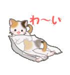 三毛猫ツインズ ひょっこり(個別スタンプ:26)