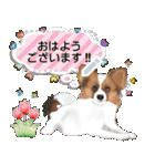 パピヨン犬のメッセージ(個別スタンプ:1)
