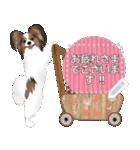 パピヨン犬のメッセージ(個別スタンプ:3)