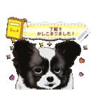 パピヨン犬のメッセージ(個別スタンプ:4)