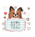 パピヨン犬のメッセージ(個別スタンプ:10)