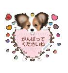 パピヨン犬のメッセージ(個別スタンプ:11)