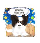 パピヨン犬のメッセージ(個別スタンプ:15)