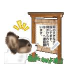 パピヨン犬のメッセージ(個別スタンプ:24)