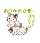三毛猫ツインズ 毎日優しいスタンプ(個別スタンプ:6)