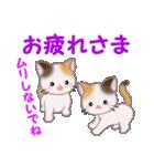 三毛猫ツインズ 毎日優しいスタンプ(個別スタンプ:7)