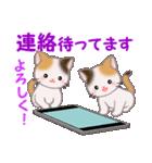三毛猫ツインズ 毎日優しいスタンプ(個別スタンプ:34)