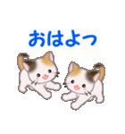 三毛猫ツインズ 毎日使う言葉(個別スタンプ:1)