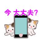 三毛猫ツインズ 毎日使う言葉(個別スタンプ:4)