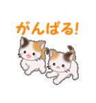 三毛猫ツインズ 毎日使う言葉(個別スタンプ:19)