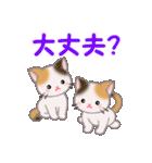 三毛猫ツインズ 毎日使う言葉(個別スタンプ:21)