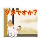 三毛猫ツインズひょっこり(丁寧)(個別スタンプ:12)