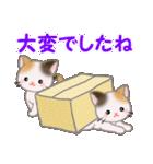 三毛猫ツインズひょっこり(丁寧)(個別スタンプ:39)