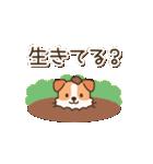 陽気なジャックわんこ2(夏)(個別スタンプ:20)