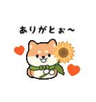 しば丸くんの夏(個別スタンプ:09)