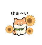 しば丸くんの夏(個別スタンプ:11)