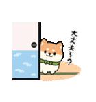 しば丸くんの夏(個別スタンプ:20)