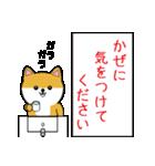 豆いぬ1 (敬語編)(個別スタンプ:36)