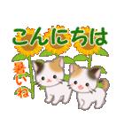 三毛猫ツインズ 夏~!(個別スタンプ:4)