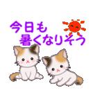 三毛猫ツインズ 夏~!(個別スタンプ:9)