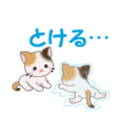 三毛猫ツインズ 夏~!(個別スタンプ:12)