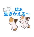 三毛猫ツインズ 夏~!(個別スタンプ:14)