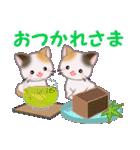 三毛猫ツインズ 夏~!(個別スタンプ:22)