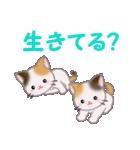 三毛猫ツインズ 夏~!(個別スタンプ:25)