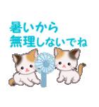 三毛猫ツインズ 夏~!(個別スタンプ:26)