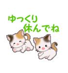 三毛猫ツインズ 夏~!(個別スタンプ:27)