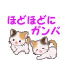 三毛猫ツインズ 夏~!(個別スタンプ:28)