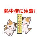 三毛猫ツインズ 夏~!(個別スタンプ:29)