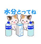 三毛猫ツインズ 夏~!(個別スタンプ:33)
