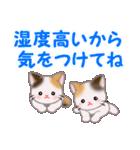 三毛猫ツインズ 夏~!(個別スタンプ:36)