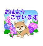 よちよち豆柴 優しい夏(個別スタンプ:1)