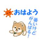 よちよち豆柴 優しい夏(個別スタンプ:2)