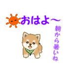 よちよち豆柴 優しい夏(個別スタンプ:3)
